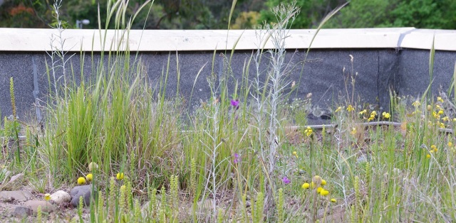 biodiversity-roof-crop.jpg