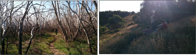 Burned out Snowgums along the trail.   A welcome rest in the shade of an unburned section.